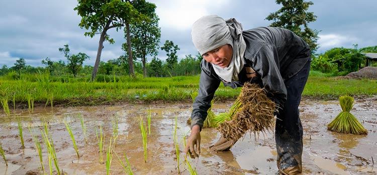 the filipino farmer Filipino farmer jerry due - duration: 2:03 sidewinder77 13,785 views 2:03 cow farm new zealand ( beauty of nature ) - duration: 2:23.